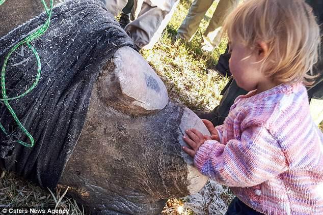 Khoảnh khắc ngọt ngào hiếm thấy: Bé gái nhẹ nhàng hôn chú tê giác bị cưa sừng khiến người lớn cũng phải lặng người suy ngẫm