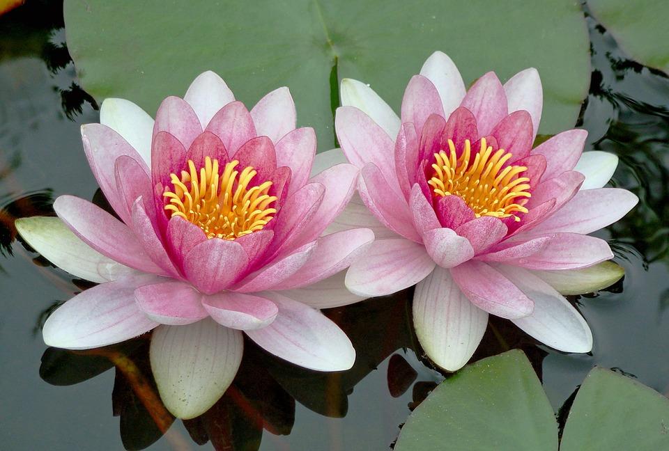 Tại sao Phật gia giảng con người cần tích đức?