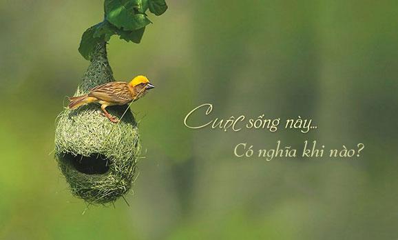 y-nghia-cuoc-song