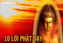 loi-phat-day-mang-lai-nghi-luc-song