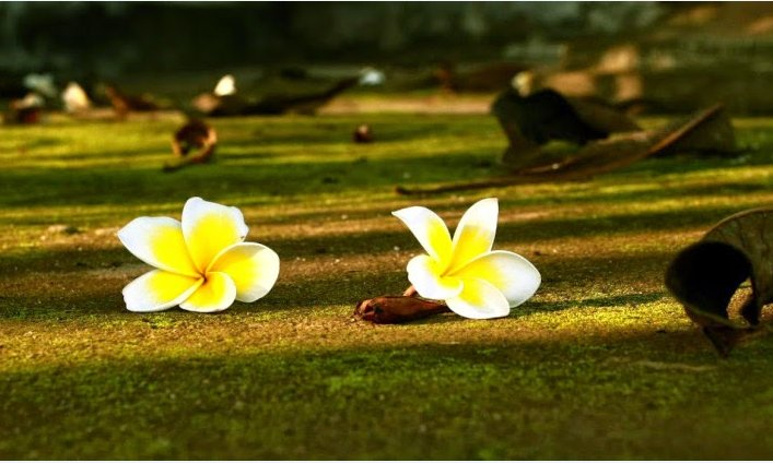 Ý nghĩa cuộc sống không nằm ở độ dài mà ở độ dày, đừng để lúc chết đi mới hối hận 5 điều sau