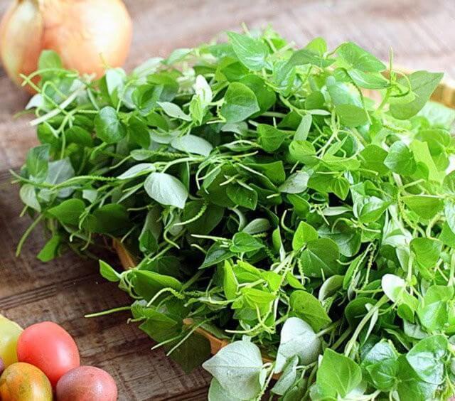 Loài cỏ dại mọc đầy ở Việt Nam lại là loại ''thần dược'' chữa được nhiều bệnh ít người biết tới